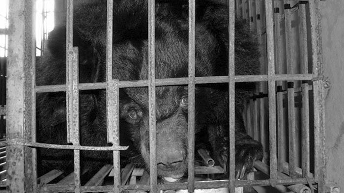 Caged Bear in China
