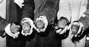 Morbid Collectibles: Shrunken Heads'