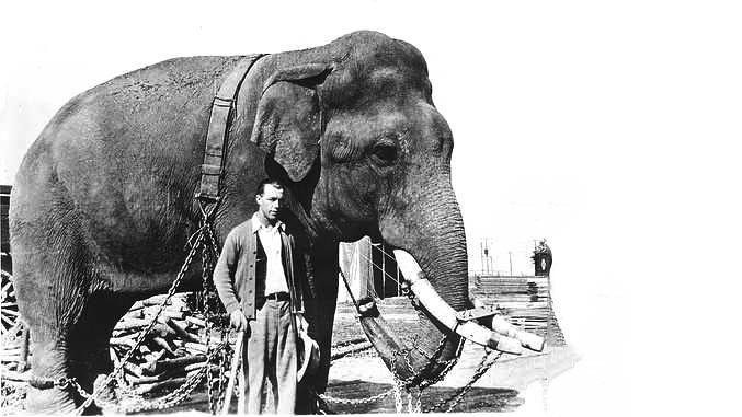 Tusko the LSD Elephant